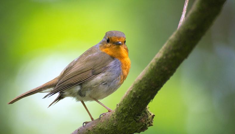 1-wildbird